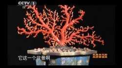 20120113寻宝视频和笔记:走进龙泉(下),佛龛,汉剑,红珊瑚,李可染