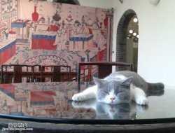 马未都博客文章第1162篇:野猫朵朵,观复博物馆的猫,朵朵会长大