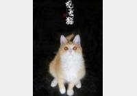 马未都博客文章第1369篇:流浪猫黄小仙