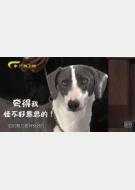 20180331收藏马未都视频和笔记:细犬,五行犬