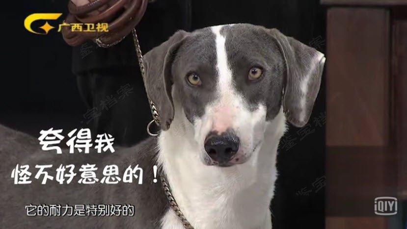 20180331收藏马未都视频和笔记:细犬,五行犬,五行学说,十骏犬图