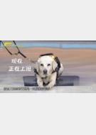 20180324收藏马未都视频和笔记:导盲犬,警犬